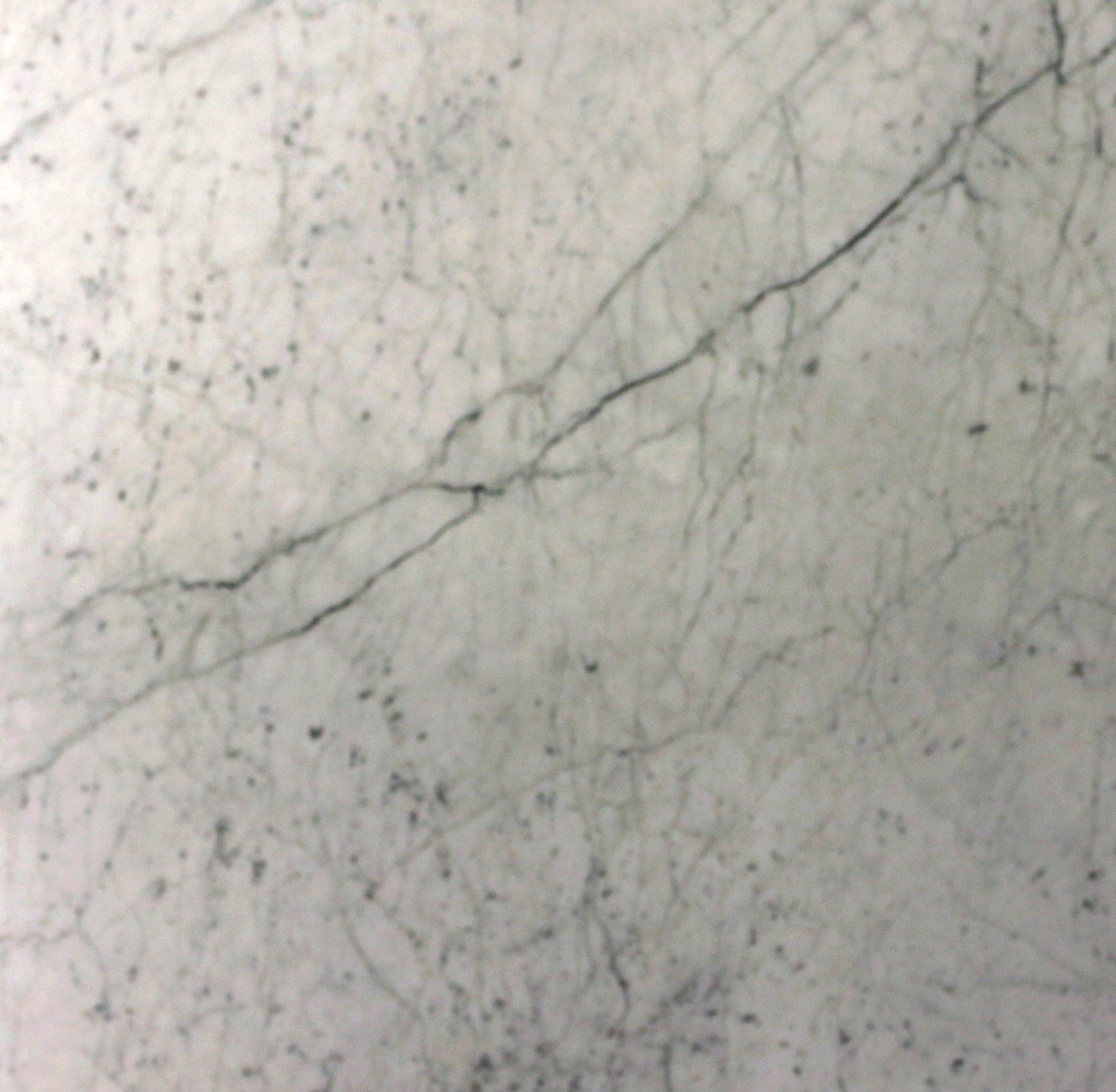 Bianco Gioia Honed 3cm (White Carrara)